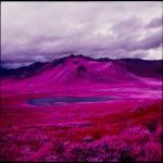Gli scatti infrarossi di Daniel Zvereff: tra fotografia e magia