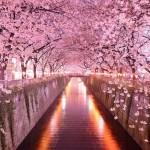 20 magici tunnel di alberi nel mondo