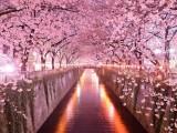 tunnel di alberi