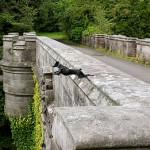 Il Ponte dei Cani Suicidi: uno dei 10 luoghi più spaventosi al mondo