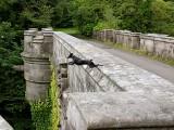 ponte dei cani suicidi wasterpiece luoghi più spaventosi al mondo