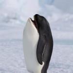 """Gli """"animali di Frankestein"""": I più divertenti fotomontaggi di animali che abbiate mai visto!"""