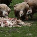 Il funerale celeste in Tibet: un rituale sacro dai risvolti inquietanti