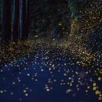 Hiramatsu Tsuneaki: l'oscuro e misterioso fotografo delle lucciole